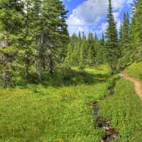Continental Divide Trail at Rocky Mountains National Park, Colorado