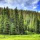 Trees and Sky in Rocky Mountains National Park, Colorado