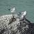 Seagulls standing on the rock at Bahia Honda State Park