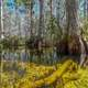 Big Cypress Mangrove Swamp