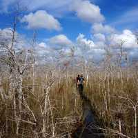 Big Cypress National Reserve on Robert's Lake Trail
