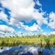 Clouds movement above the swamp at Big Cypress