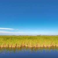 Horizon line of Marsh Grass with pond