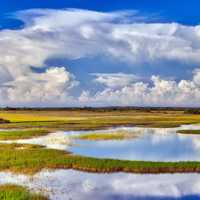 Panoramic Swamp landscape with sky and clouds