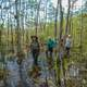 People walking across the swamp in Big Cypress