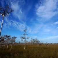 Sky and Clouds over the swamp at Big Cypress National Reserve, Florida
