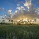 Sunlight beyond and trees and clouds at Big Cypress National Preserve