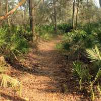 Forest Walkway at Big Shaols State Park, Florida