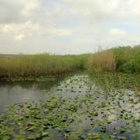 Clear pond with lillies at Everglades National Park, Florida