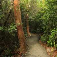 Forest Path at Everglades National Park, Florida