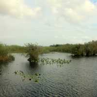 Lake in the Everglades in Everglades National Park, Florida