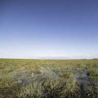 Landscape of the Marsh at Everglades National Park