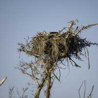 Large Bird Nest in Everglades National Park