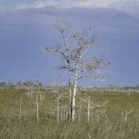 Tree in the middle of the Marsh at Everglades National Park