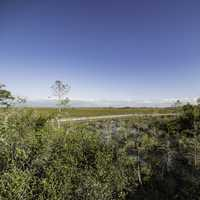 Walkway and landscape in Everglades National Park