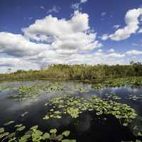 Wetlands and sky on the Anhinga Trail