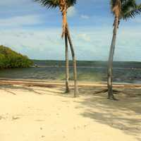 Beach and trees at Key Largo, Florida