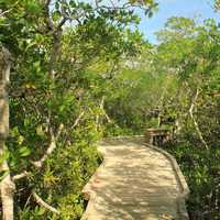 Boardwalk at Key Largo, Florida