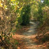 Forest walkway at Long Key State Park, Florida
