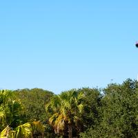 Lighthouse over the trees in St. Augustine, Florida