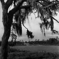 Temple Terrace landscape in Florida with tree