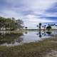 Flooded Swampy landscape in St. Augustine