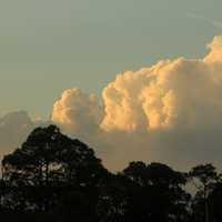 Clouds over trees at St. Sebastion River State Park, Florida