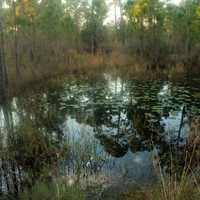Pond in St. Sebastion River State Park, Florida