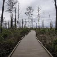 Boardwalk into the swamp in Okefenokee National Wildlife Refuge