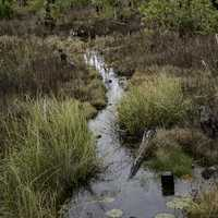 Stream in the Marsh in Okefenokee National Wildlife Refuge