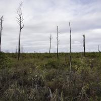 Stripped Tree landscape at Okefenokee National Wildlife Refuge