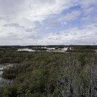 Surrounding Landscape of Okefenokee National Wildlife Refuge