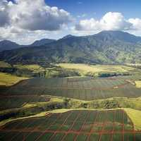 Farms, Mountains, and Landscape in Hawaii