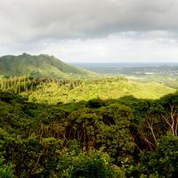 Wide Angle Forest Landscape of Oahu in Hawaii