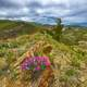 Flowers on the Mountain Ridge in Idaho