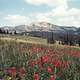 Mt. Jefferson and Indian Paintbrush Flowers Landscape