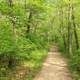 Forest trail path at Indiana Dunes National Lakeshore, Indiana