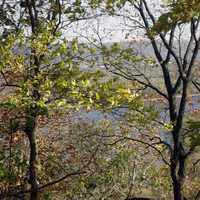 Peering at Mississippi through trees at Effigy Mounds, Iowa
