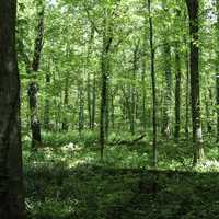 Forest at Otter Creek Outdoor Recreation Area, Kentucky