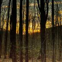 Sunset in the Forest at Backbone Mountain, Maryland