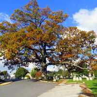 Lutheran White Oak in Manchester, Maryland