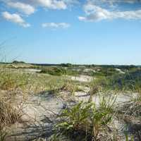 Sand Dunes at Cape Cod, Massachusetts