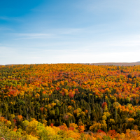 Colorful treetops landscape in the Autumn in Copper Harbor