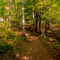 Shady forest pathway on Sugarloaf mountain