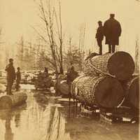 Lumbering Pines in the 1800s in Michigan