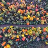 Overhead look at the trees in the Autumn in Michigan