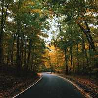 Road through the trees in Harbor Springs, Michigan