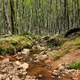 Stream flowing through the woods at Porcupine Mountains State Park, Michigan