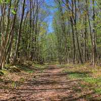 The walking path at Porcupine Mountains State Park, Michigan