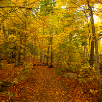 Tall Photo of Autumn leaves in Porcupine Mountains
